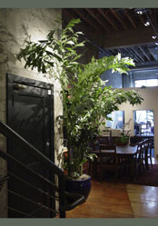 Indoor greenery bringing the serenity of nature indoors for Indoor air design san jose